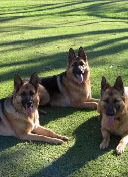 Kurmond Veterinary Clinic Three Dogs